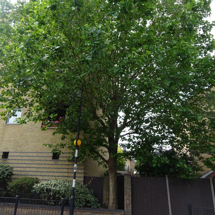 Tree Management Surveys