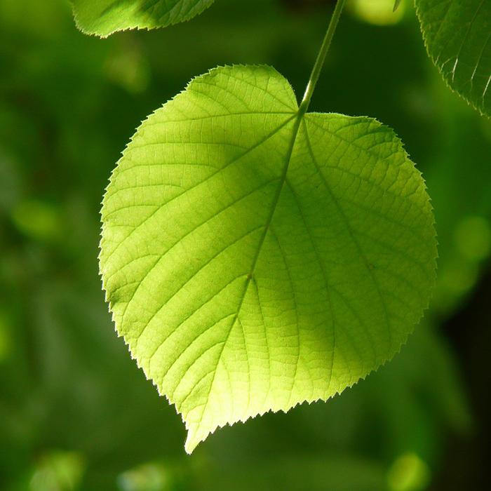 Tree and Shrub Species Surveys