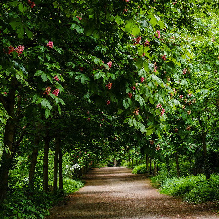 Tree Constraints Plans