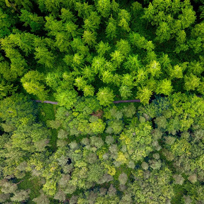Arboricultural Method Statements