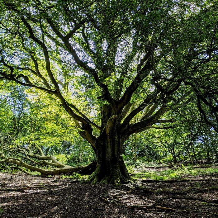 Tree Analytics